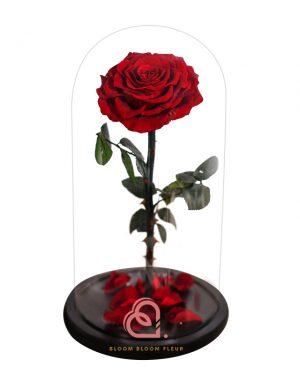 巨型單支玫瑰保鮮花玻璃罩(深紅色)