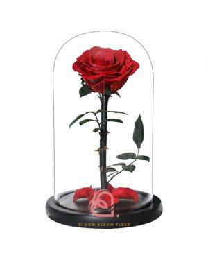 單支玫瑰保鮮花玻璃罩(深紅色)