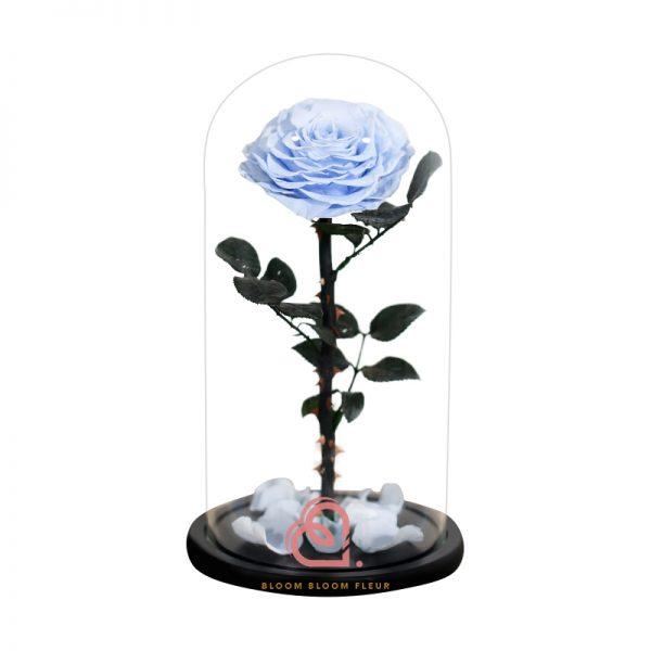巨型單支玫瑰保鮮花玻璃罩(淺藍色)