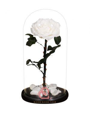 巨型單支玫瑰保鮮花玻璃罩(白色)