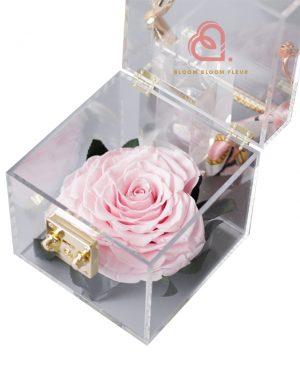 單支玫瑰保鮮花透明禮盒(粉紅色)