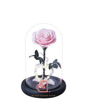 心型燈單支玫瑰保鮮花玻璃罩(粉紅色)