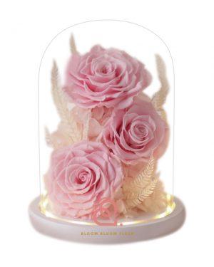 大玫瑰玻璃全景觀(粉紅色)