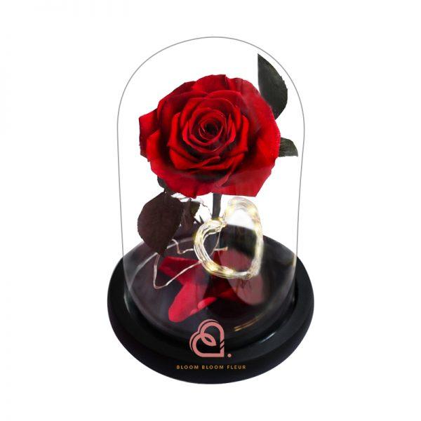 心型燈單支玫瑰保鮮花玻璃罩(紅色)