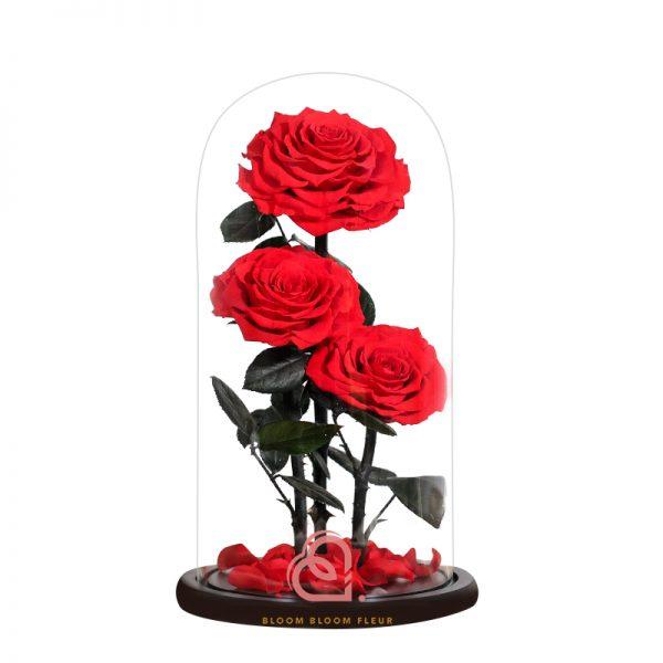 巨型三支玫瑰保鮮花玻璃罩(紅色)