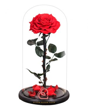 巨型單支玫瑰保鮮花玻璃罩(紅色)